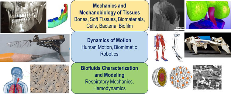 visual infographic showing three parts of biomechanics such as a skull, and human tissue of the body